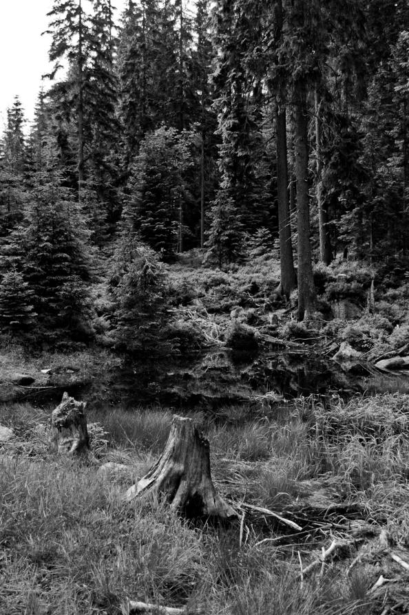 V lese bez barev