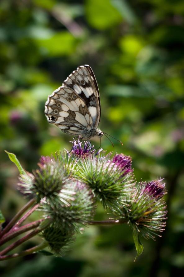 Dnes byl motýlí den.