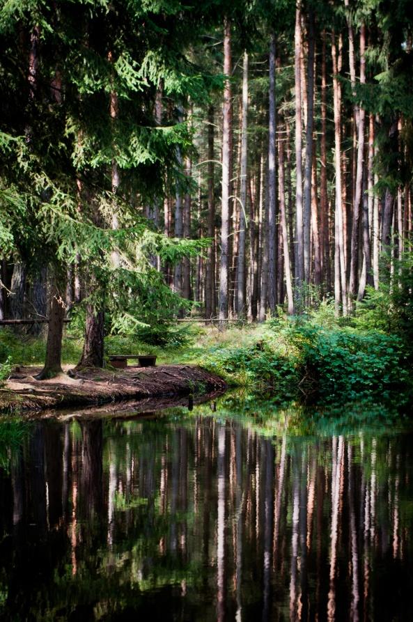 Pohoda les
