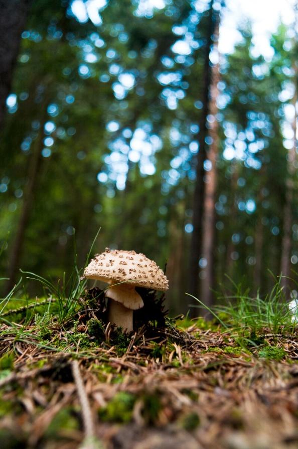 Růžová budoucnost anebo vyhlídka na houby?