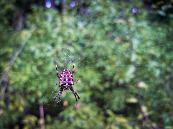 ...pavouk sítě nachystaný.