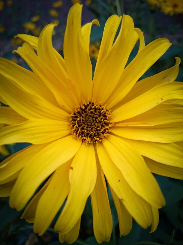 Žlutá v září září.