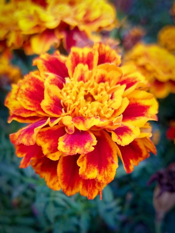 Podzimní barvy podzim barví.