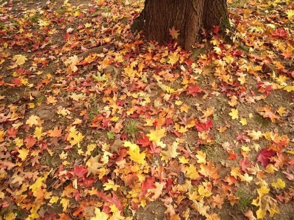 Včera podzim malovaný, dnes jen jako malovaný