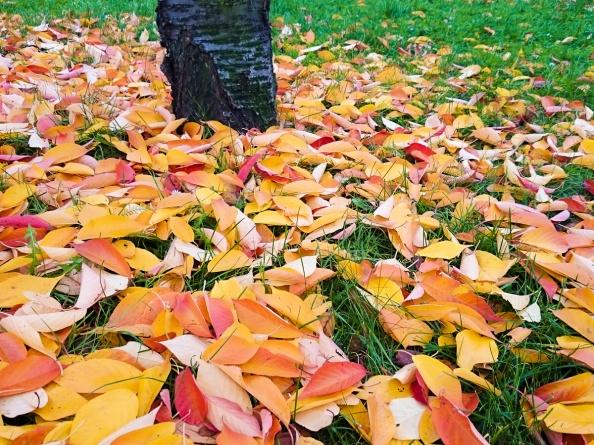 Listy denně čerstvé